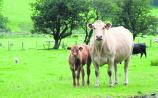 Beef crisis talks to reconvene on Monday, with one issue remaining