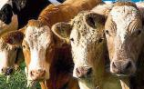 Report: Beef prices to increase from next week