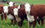 Market conditions for beef remain strong