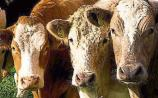 Longford Leader Farming: 'Northern' steers fetching €250 per head more than 'Southern' equivalent
