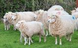 Now is the time to tackle liver fluke in sheep