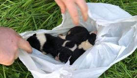 PICTURES | Puppies fly tipped like pieces of trash and left dangling for dead above a river, now in ISPCA care