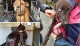 PHOTOS: 17 animals seized due to welfare concerns in garda led investigation