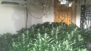 €140,000 worth of cannabis plants discovered by Gardaí