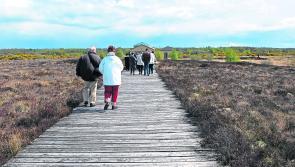 Corlea Trackway given €130k boost
