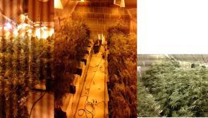 Longford Gardaí ramp up pressure on cannabis gangs
