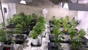 Garda Armed Support Unit assists in €60,000 cannabis bust