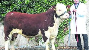 Longford Show to attract top pedigree breeders from all over the country
