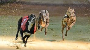 All paws on Longford town's Mall for successful Greyhound walk