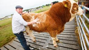 Irish Shows Association issue new advice as 43 events are cancelled due to Covid-19