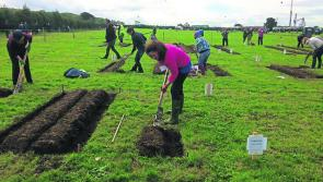 National Ploughing Championships: The full list of all the competitors, from Longford and beyond, going for glory