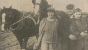 Longford Ploughing Memories  1992:  Generations of ploughmen attend 58th Longford Championships