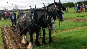 Weather update for the National Ploughing Championships 2017