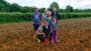 Pick and carve your own pumpkin for Halloween on this charming Laois farm