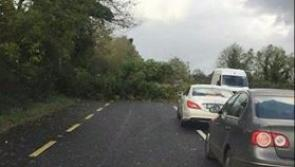 #Longford on RED Alert: Trees down at various locations across county Longford #Ophelia