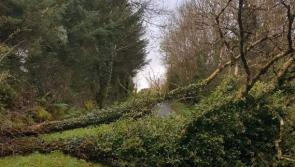 Department of Agriculture assesses damage in aftermath of Ophelia