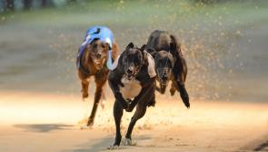 Letter to the editor: Greyhounds need rescuing from the IGB