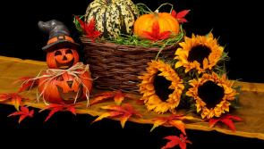 ALONE call on Longford folk to check on older neighbours this Halloween
