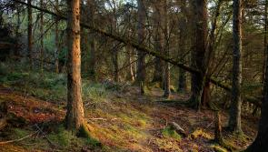 Forest and woodland establishment events to be held in Cavan