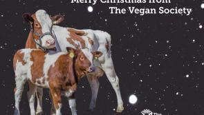 How to host a vegan this Christmas