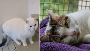 ISPCA Centre in Longford appealing for new homes for over 100 cats