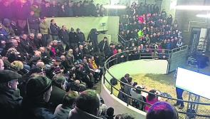 Longford farmers at a loss to sell their cattle as marts close