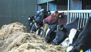 ICMSA call for Farm Assist payments to be increased