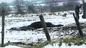 Horse found dead in field outside Longford town died from colic as result of overfeeding