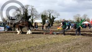PICTURES:  Fun in the sun at 84th County Longford Ploughing Championships