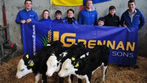 GAA club in Longford is rearing calves to raise funds