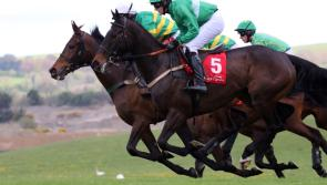 Under starters orders for a special Punchestown Festival