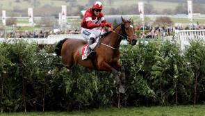 Grand National winner Tiger Roll on parade at Kilbeggan Races