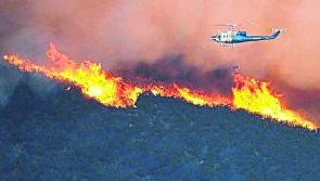 Weather warning: 'High risk' forest fire warning issued amid warm weather forecast
