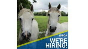 Longford Leader Jobs Alert: ISPCA recruiting an Equine Care Assistant  for their National Animal Centre at Kenagh