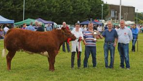 Crowds savour thrills of hugely successful Granard Show