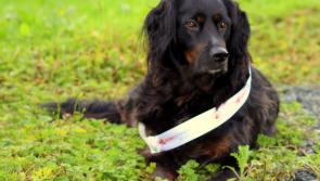 Help this Longford dog to become the next Nose of Tralee