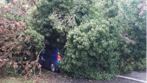 BREAKING: Tree falls onto car in Offaly as crowds head to Ploughing 2018