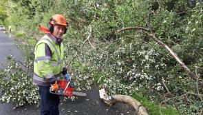 Pictures:  Fallen trees and debris being removed on north Longford roads this morning