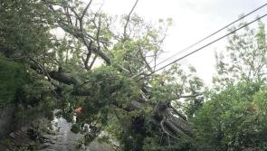 Health and Safety Authority (HSA) warns on danger posed by fallen trees after Storm Lorenzo