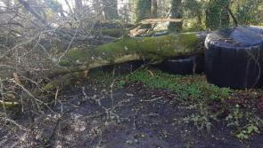 Longford counts cost of Storm Ali onslaught