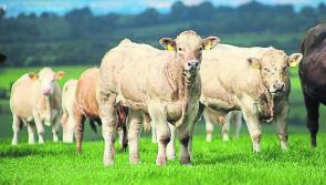 Longford Leader farming: BEAM deadline this Sunday