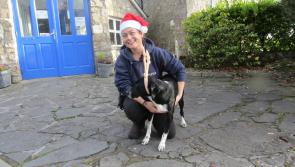 Mary Daly will be caring for neglected animals with no home to call their own at the ISPCA Centre in Longford on Christmas Day