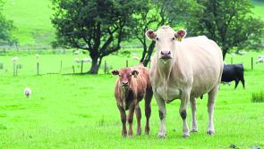Growing clamour for measures to be introduced to underpin beef sector