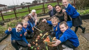 Ready, Steady…Grow! With Agri Aware's Incredible Edibles programme