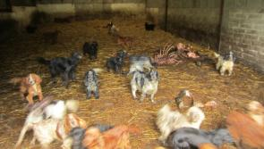 Puppy farmer sentenced to three years in jail and banned from keeping dogs or equines for life