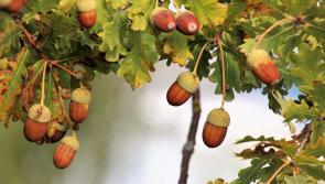 Longford garden receives 'Bloom' recognition
