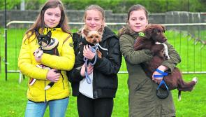 PICTURES | Furry friends barking up the right tree at the  Attic House Dog Show in Longford town