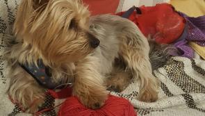 Family pet believed to have been stolen from Ballymahon