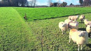 Steps to improving grassland management