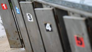 Irish Greyhound Board condemn deplorable actions  highlighted in RTÉ Investigates programme